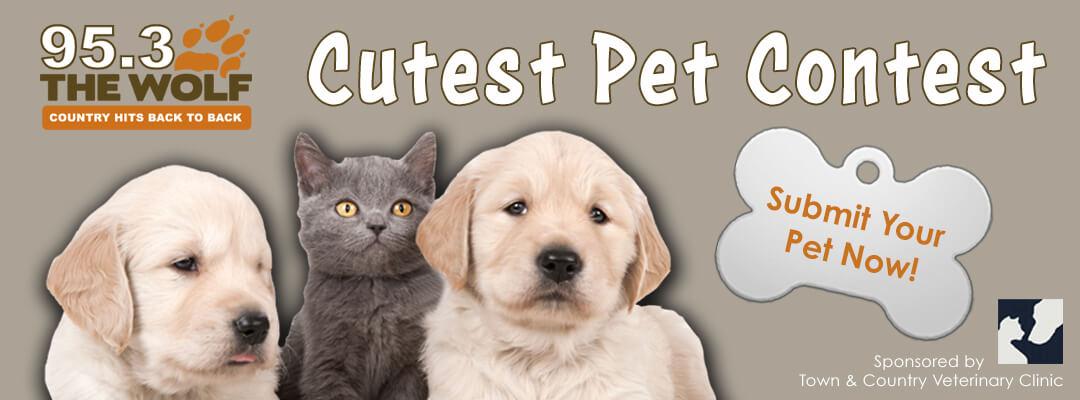 cute-pet-banner